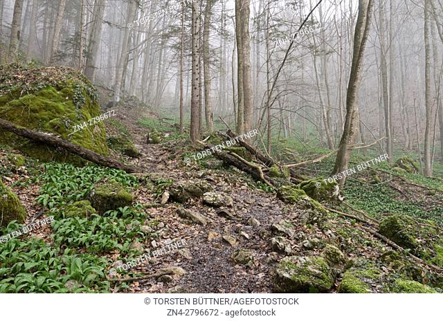 Hiking Trail in the Dürres Eck Mountain region nearby the Limestone Alps National Park, Austria
