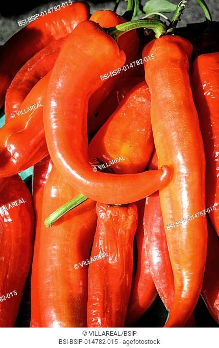Organic habanero peppers
