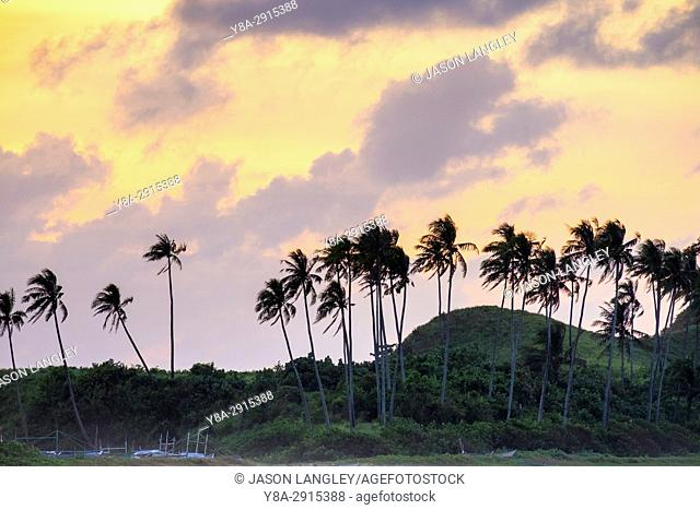 Palm trees at sunset, Nacpan Beach, El Nido, Palawan, Philippines