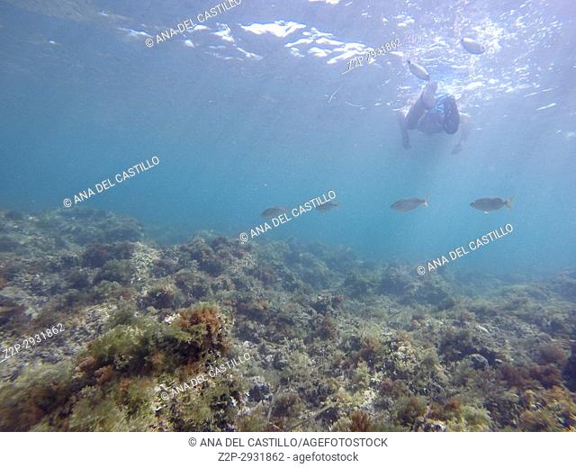 Underwater image Las Rotas nature reserve Denia Alicante Spain. Salpa fishes and swimmer