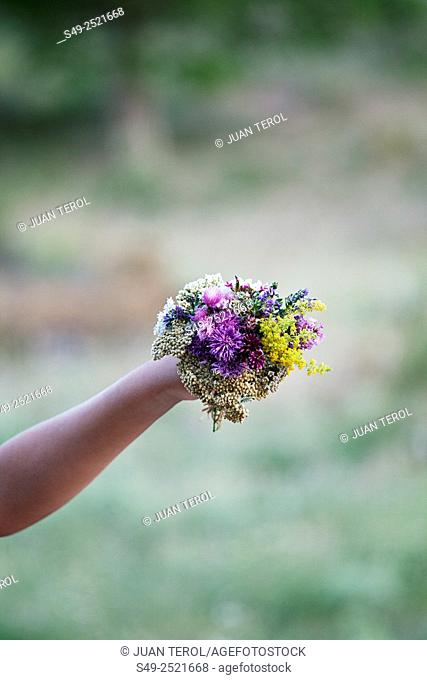 Gathering Fresh Flowers
