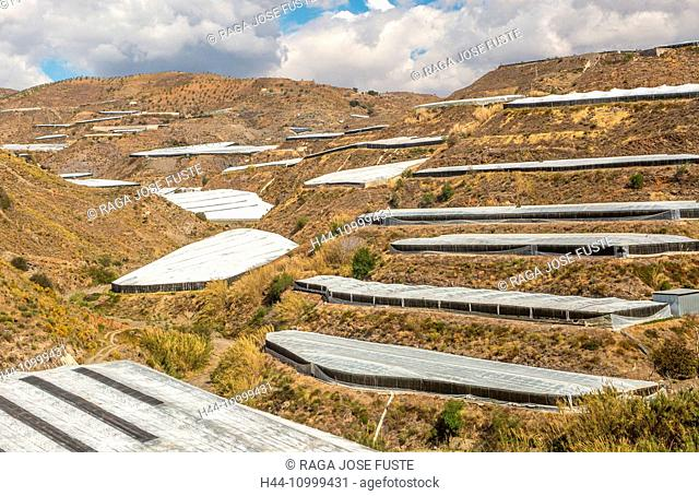 Spain, Almeria Province, agriculture