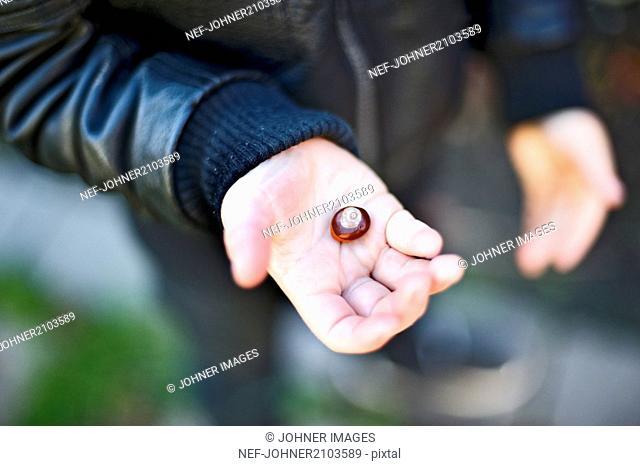 Boy holding chestnut
