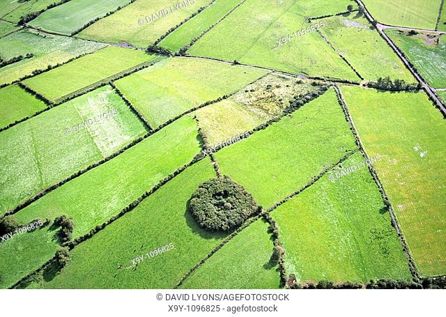 Now surrounded by pasture fields, a circle of trees marks an ancient rath or fortified homestead near Ballina, Co  Mayo, Ireland