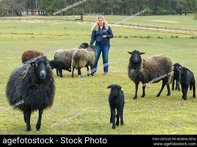 20 March 2020, Brandenburg, Groß Schönebeck: Imke Heyter, managing director of the Schorfheide Wildlife Park, stands among her rough-wooly Pomeranian land sheep...