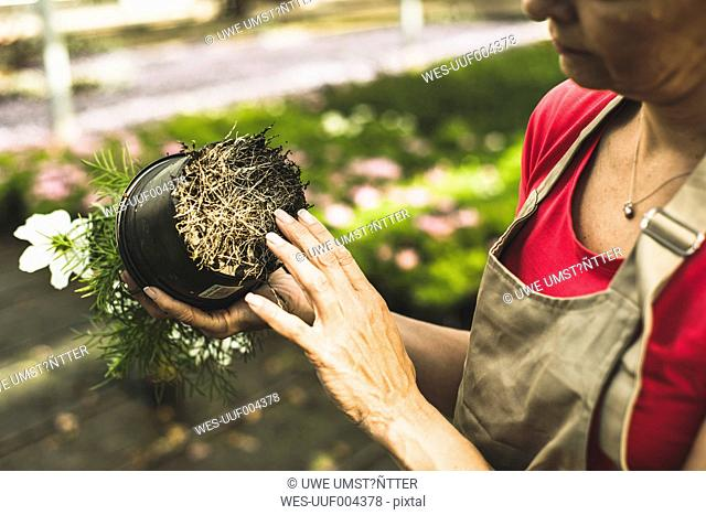 Woman in nursery examining roots of a flower