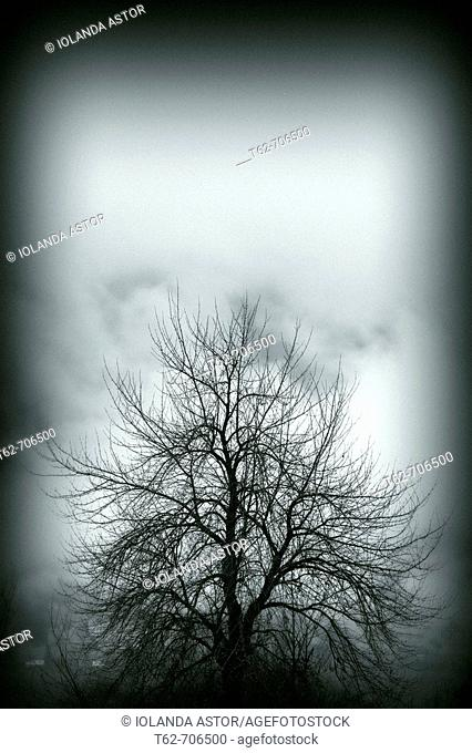 Tree in winter amid the fog