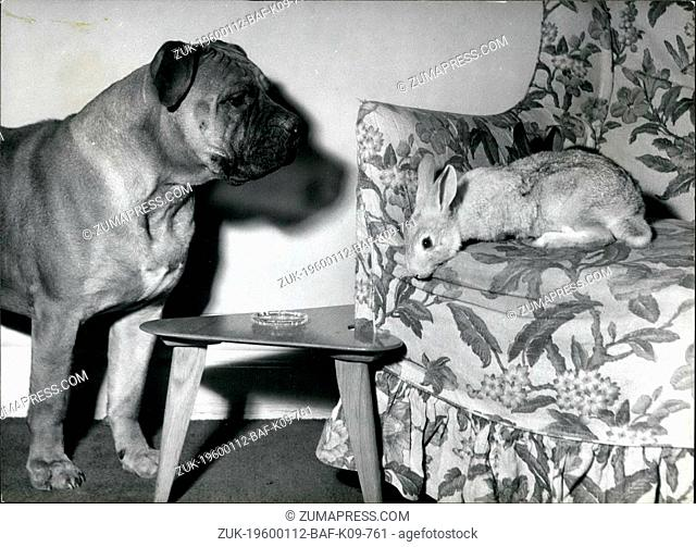1962 - The Cheek of time Bunny. now he's on the armchair Buster, the -ustiff pet of Mrs. Lynn Tatelman of golders green, London finds-his pol the bunny rabbit...