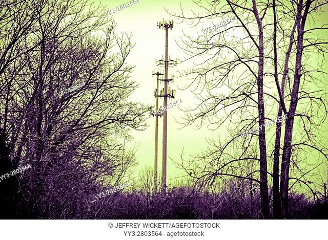 Cell phone towers flanked by bare trees in Indianapolis, Indiana, USA