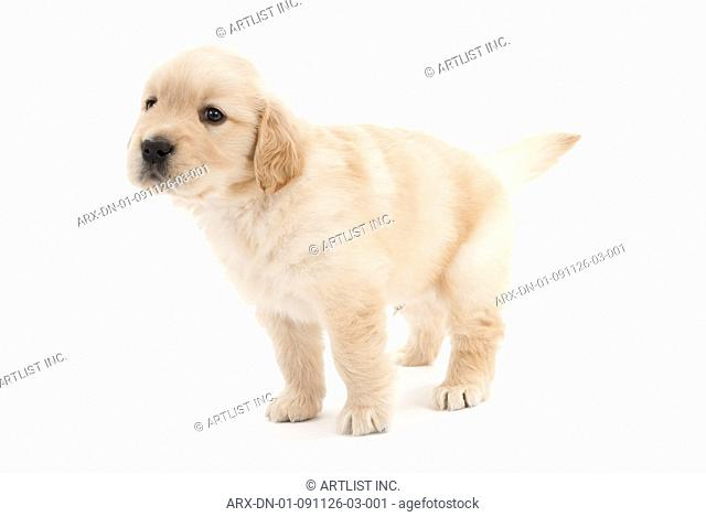 A puppy looking left