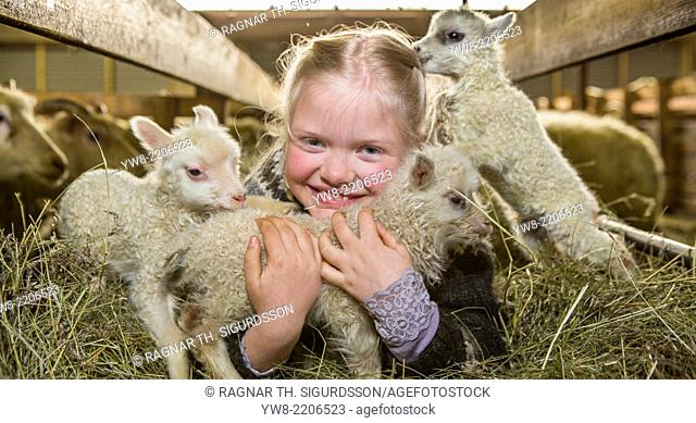 Young girl with newborn lambs, Iceland