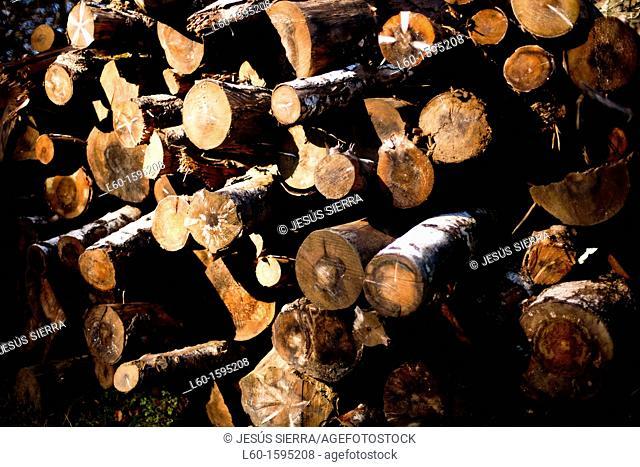 Wood in Selva de Irati, Navarre, Spain