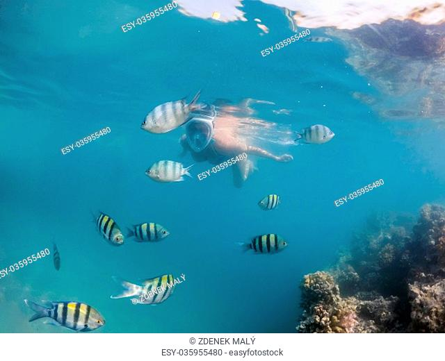 Woman snorkel swim in underwater exotic tropics paradise with school of fish and coral reef, beautiful view of tropical sea. Marsa alam, Egypt