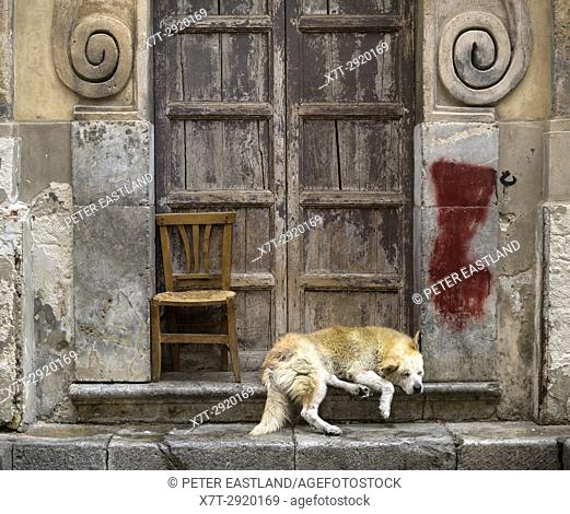 Sleeping dog in a Baroque church doorway, in the Via Porto Carini, Capo market, Central Palermo