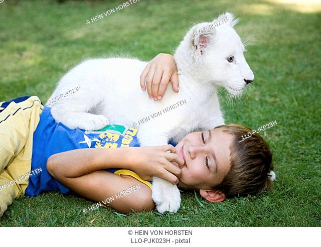 Young boy plays with a white lion Panthera leo krugeri cub on the grass. Bethlehem, Free State Province, South Africa