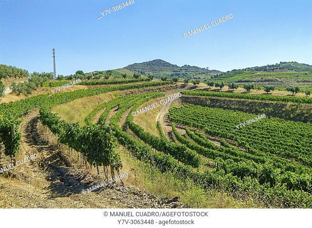 Vineyards. Bodega Mas D'En Gil. Comarca del Priorat, Tarragona Province, Catalonia, Spain