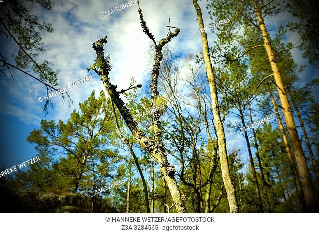 Typical forest vegetation of Sweden
