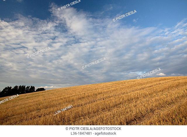 After harvest  Suwalski region  Poland