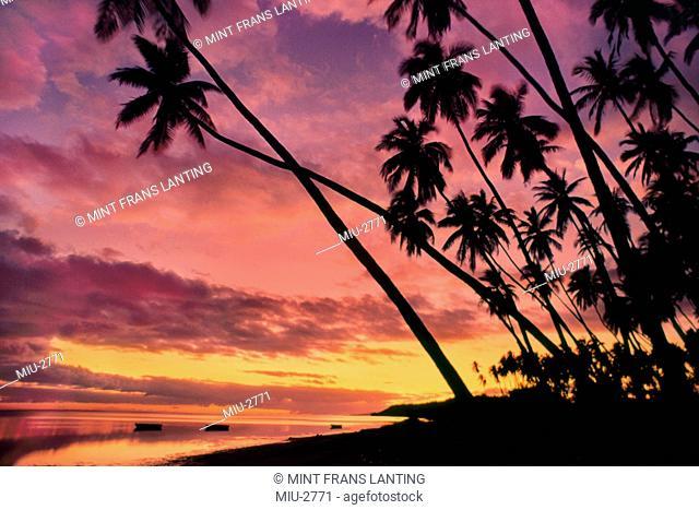 Palms at sunset, Molokai, Hawaii