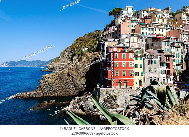 Typical colourful houses by the little port, Riomaggiore, Italian Riviera, Liguria, Italy