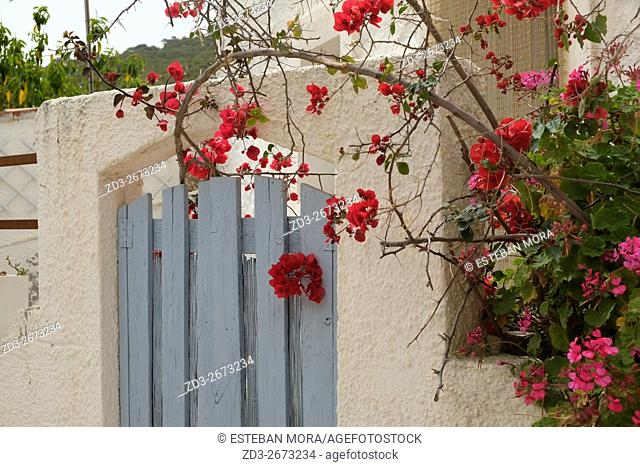 Traditional blue Greek door detail, with pink flower tree