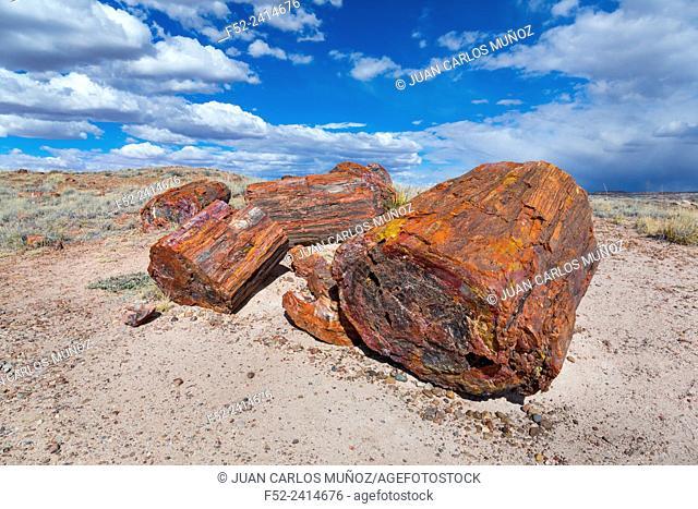 Petrified wood, Petrified Forest National Park, Arizona, USA, America