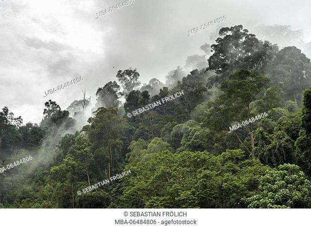 Nebulous mood in the mountainous jungle of the Gunung Leuser Nationalpark on the Indonesian island Sumatra