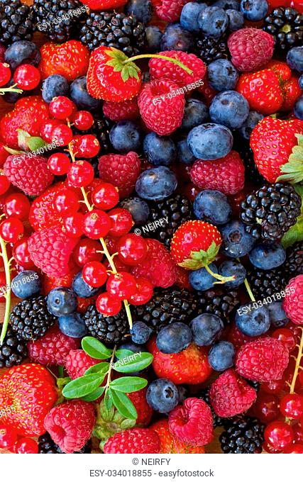bluberry, raspberry, blackberry and red currrunt colorful berries
