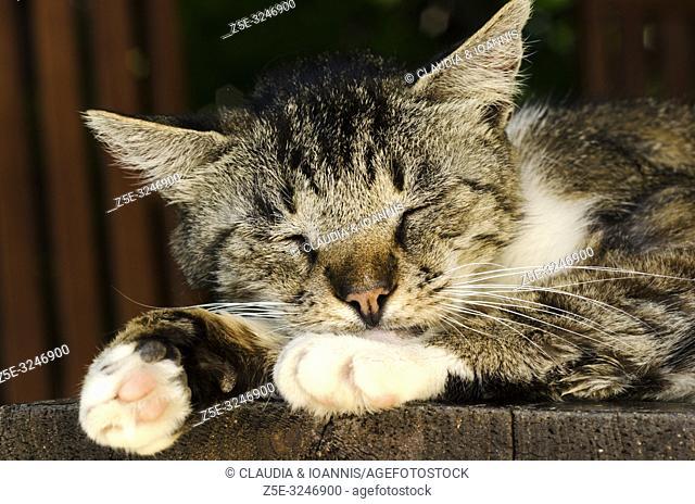 Close up of a sleeping cat