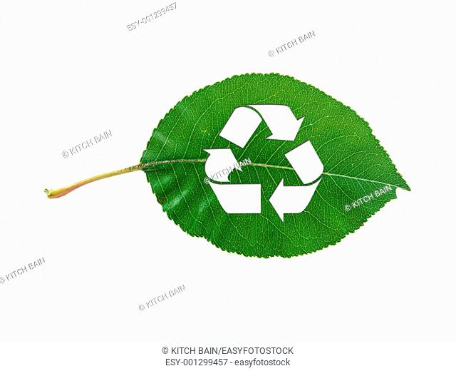 A leaf recycle symbol isolated against a white background