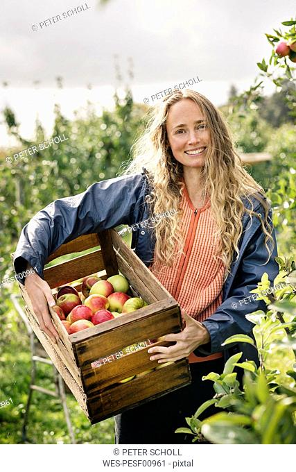 Smiling woman harvesting apples in orchard