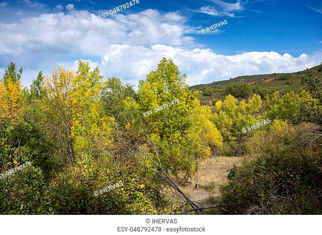 Narrow-leafed Ash, Fraxinus angustifolia, and Poplar groves next to de River Jarama, in Tamajon Mountains, Guadalajara Province, Spain