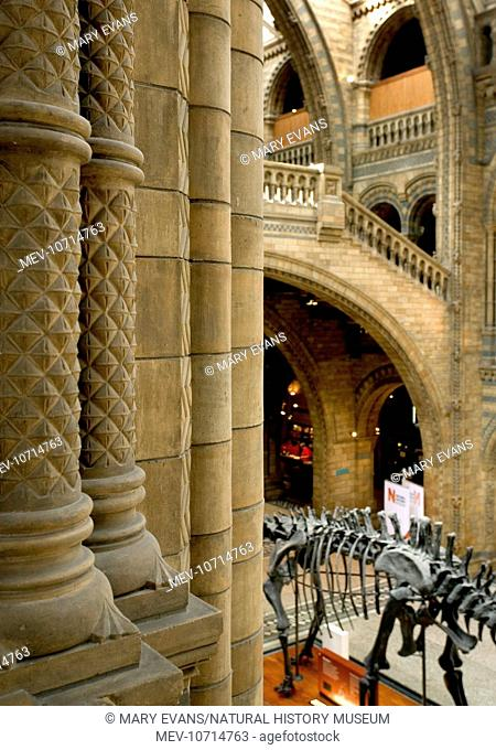 Architectural view of the Central Hall at the Natural History Museum, London. With the Diplodocus skeleton in the background