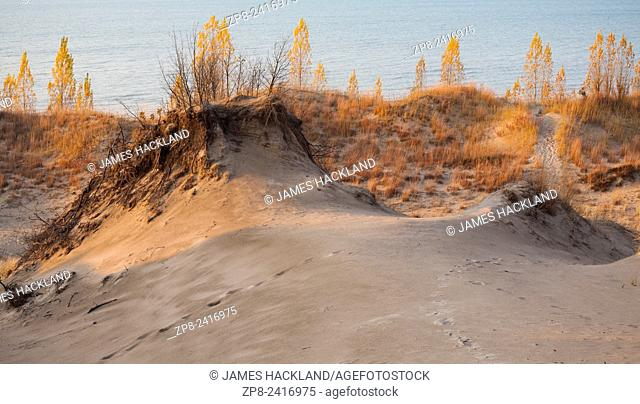 Sand dunes, bright yellow trees and Lake Huron in the background. Pinery Provincial Park, Ontario, Canada