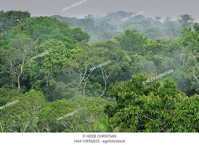 10856825, Ecuador, rainforest, forest, wood, natur