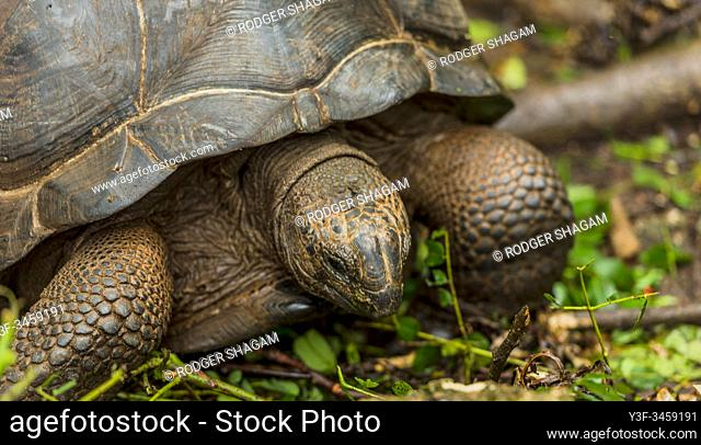 Zanzibar. Changu Island is home to the Geochelone Giganta (Giant Land Tortoiose). Second only in size to those found on the Galapagos Islands
