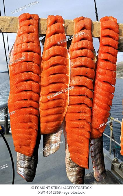 Arctic Char drying in the sun, Torngat Mountains National Park, Newfoundland and Labrador, Canada