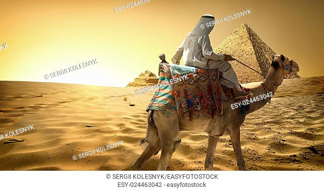 Bedouin on camel in sand desert near pyramids