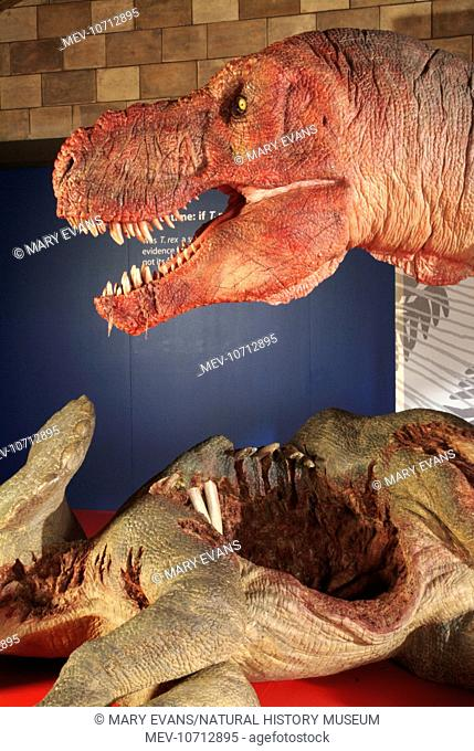 Model of the animatronic predator T. rex in 'T. rex The Killer Question' exhibition at the Natural History Museum, London, 2003