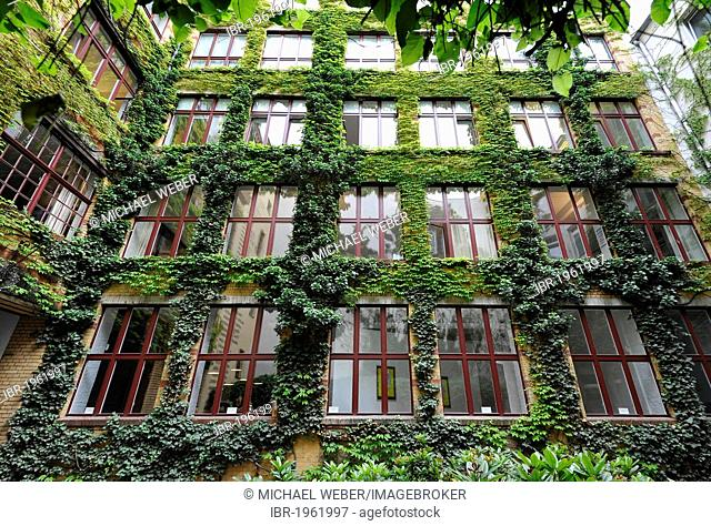 Sophie-Gips-Hoefe, yards, Mitte quarter, Berlin, Germany, Europe