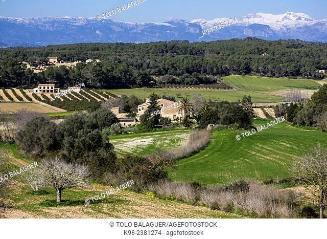 near Randa, Albenya valley whit Tramuntana mountains with snow, Majorca, Balearic Islands, Spain