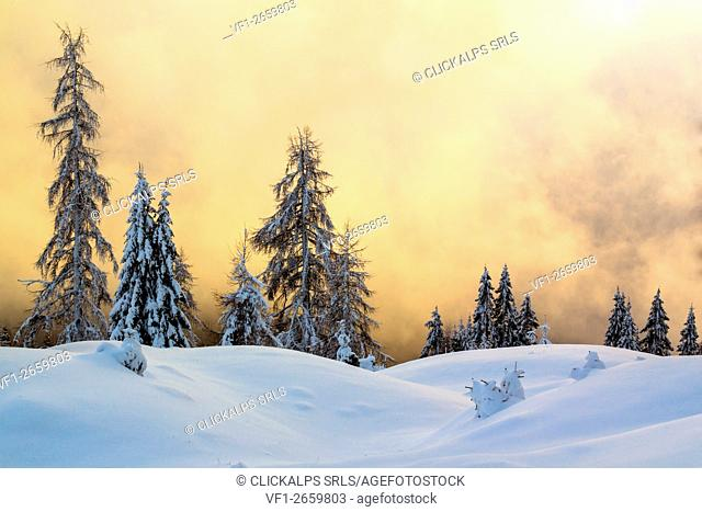 Dolomites, Veneto, Belluno, Italy. Conifers covered by snow in a surreal winter landscape