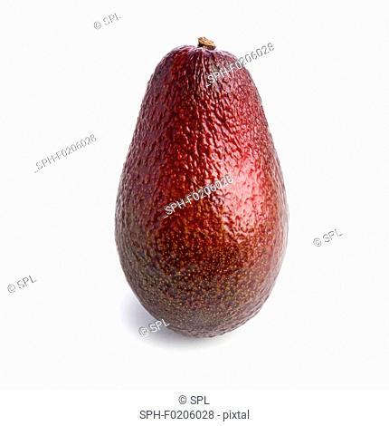Red avocado