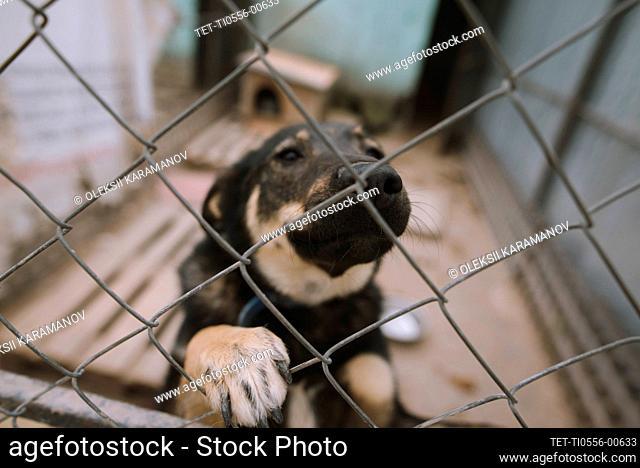 Portrait of dog behind fence in animal shelter
