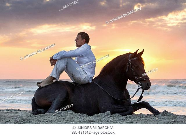 Pure Spanish Horse, Andalusian. Stuntman Vali Vasilescu with bay stallion sitting on a beach at sunset. Romania