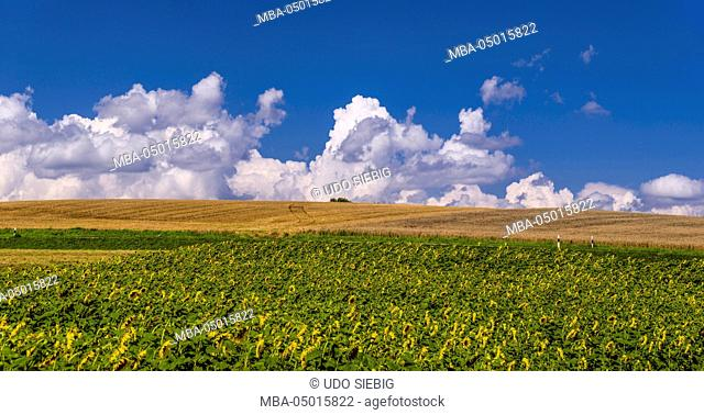 Germany, Bavaria, Upper Bavaria, Hallertau, to Scheyern, sunflower field with Scheyern