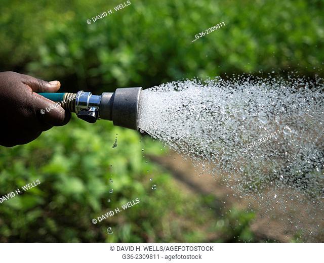 Women watering plants at Manton Bend Community Garden in Providence, Rhode Island