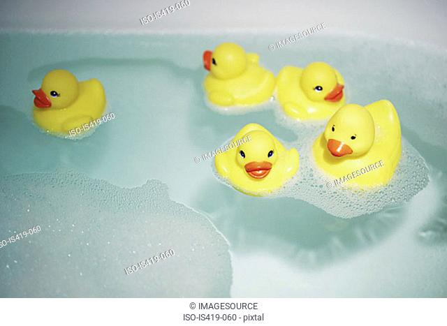 Rubber ducks in the bath