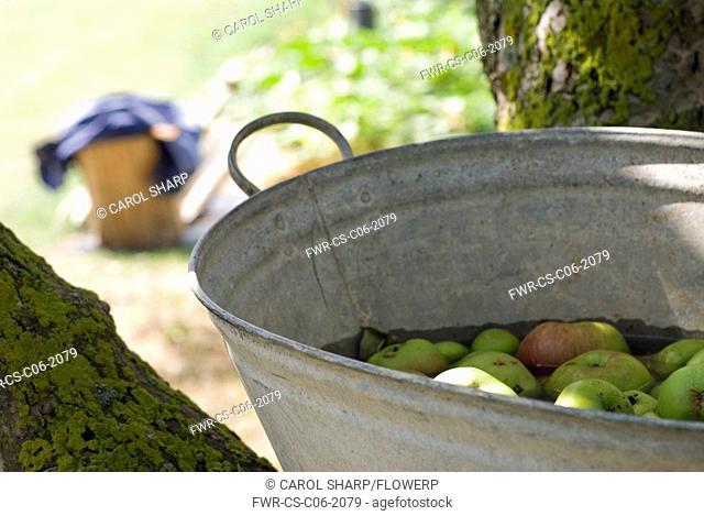 Malus domestica, Apple