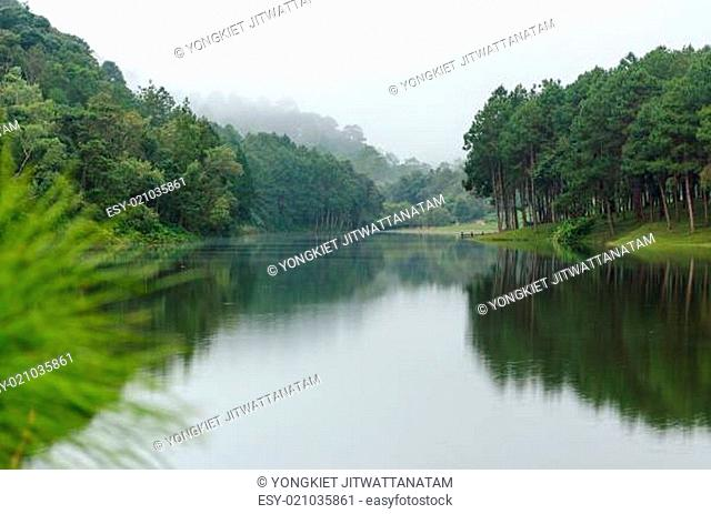 Nature landscape at dawn of lakes and pine forests